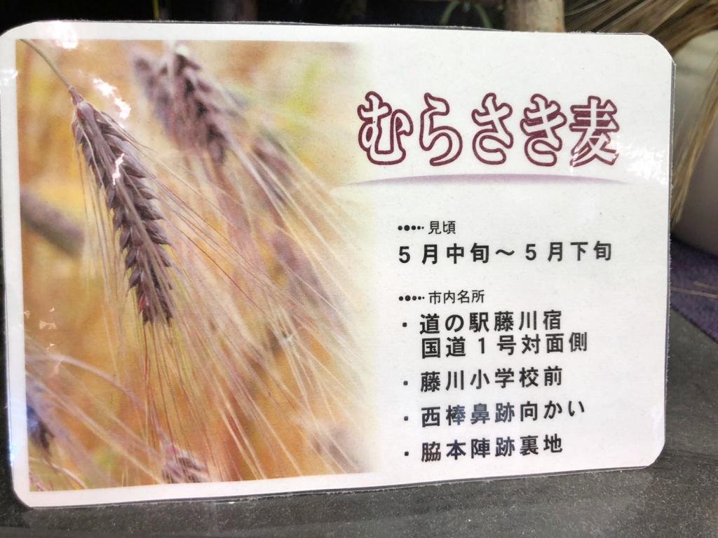 むらさき麦20196
